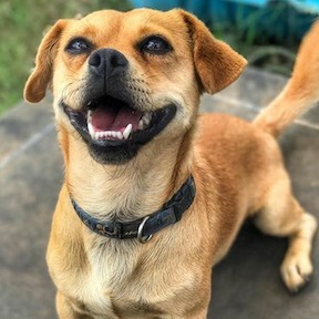 Joey Adoption dog