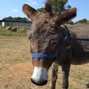donkey adoption