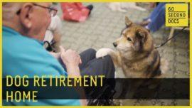 Dog retirement home