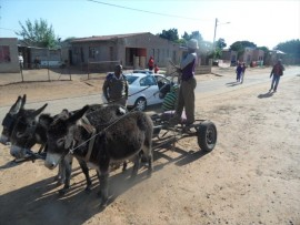 Donkeys pull a cart north of Pretoria.