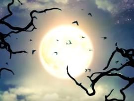 halloween video 3