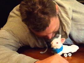 VIDEO OF THE DAY: Paralyzed bunny gets new legs