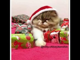 VIDEO OF THE DAY: Santa kitty won't share