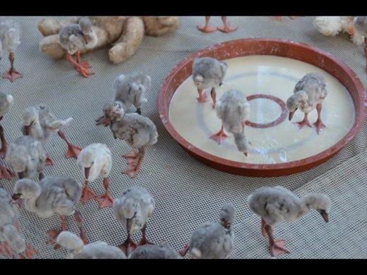 Flamingo In Huis : Flamingo print afdrukken aquarel vogels klaar om etsy