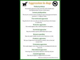 Reasonsforaggression_08379
