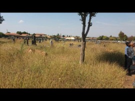 It makes it hard for residents to locate graves as the grass has overgrown. Photo: Wian Gordon