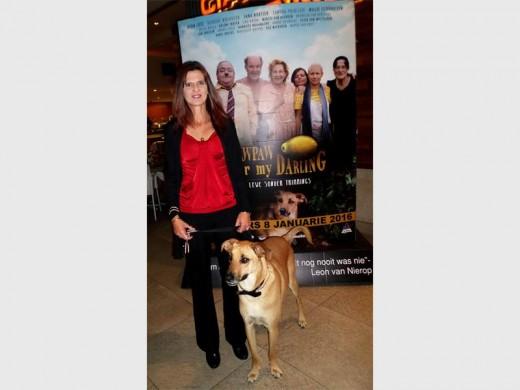 Stray Dog Turns Movie Star Randburg Sun
