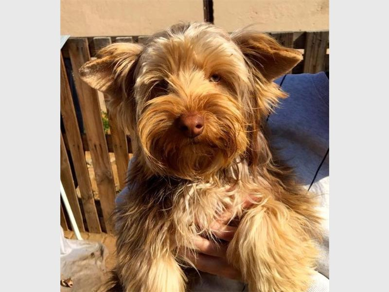 67 pets to adopt | Randburg Sun