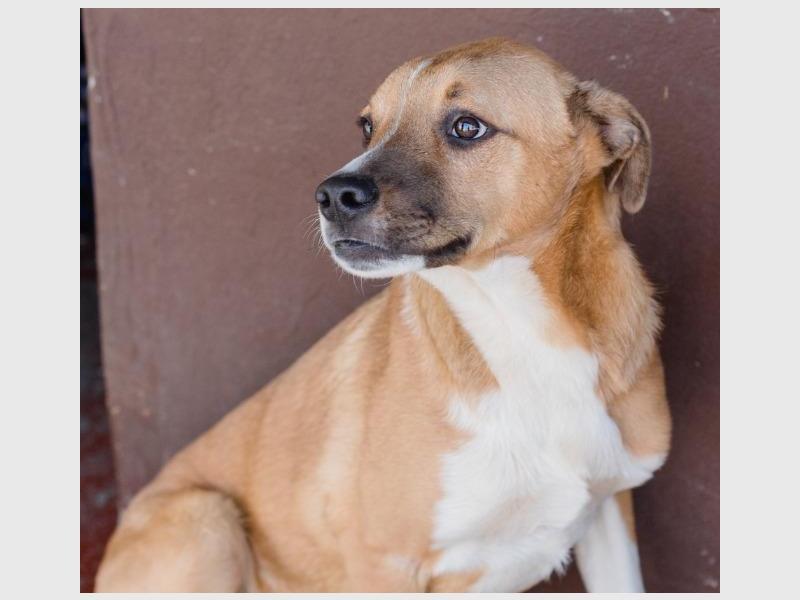 67 pets to adopt   Randburg Sun