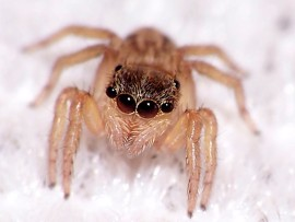 8_Eyes_Again_spider