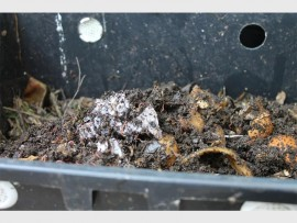 Earthworms thrive in a mixture of kitchen peelings, garden waste and vermicompost.