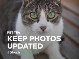 Pet tips from Shush Blairgowrie. Photo: Supplied.