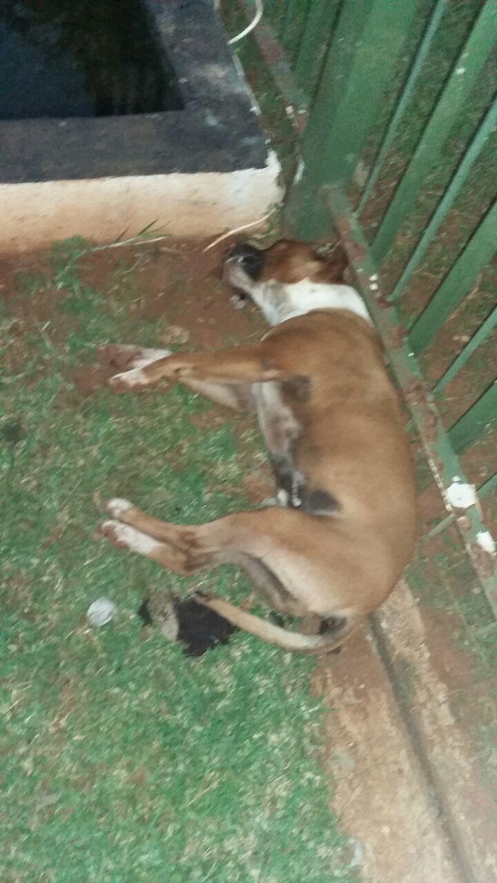 38 honde in 20 dae vergiftig   Middelburg Observer