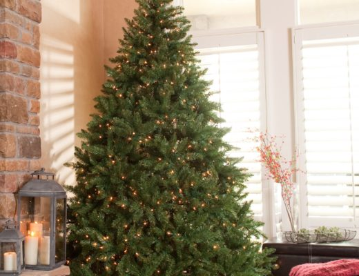 The history of the Christmas tree – why it's pine