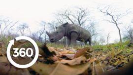 Rescuing Rhinos | Racing Extinction (360 Video)