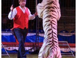 Mclaren Circus.